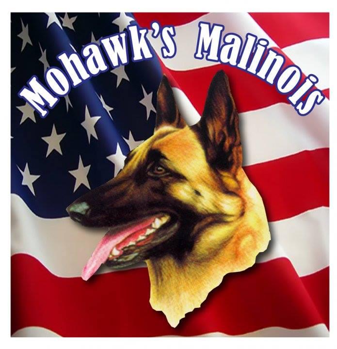 Mohawks Malinois
